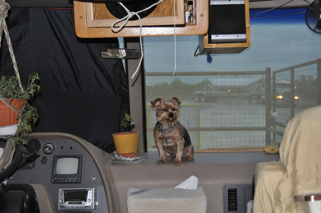 Gizmo our Little Yorkie keeps us posted when the sand trucks are comming in.